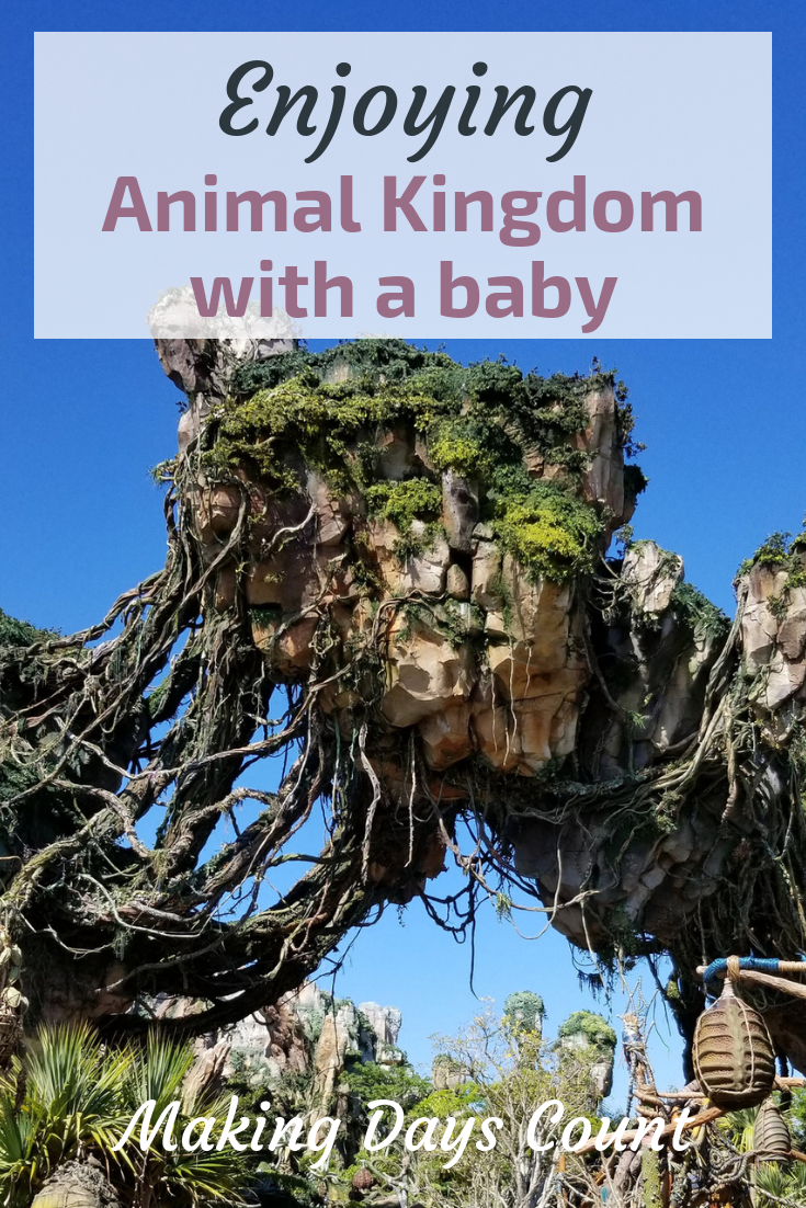 Pin this: Animal Kingdom with a baby