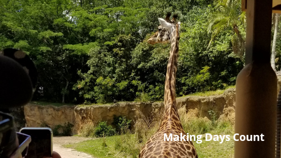 Giraffe at Kilimanjaro Safaris - Animal Kingdom with a baby