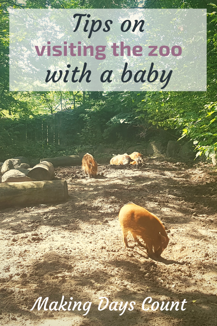 Visiting the Toronto Zoo with a baby