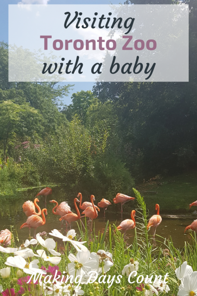Visiting Toronto Zoo with a baby