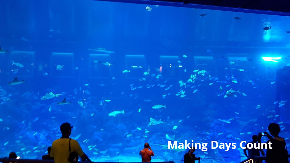 SEA Aquarium: VIsit Sentosa Island in Singapore with a baby