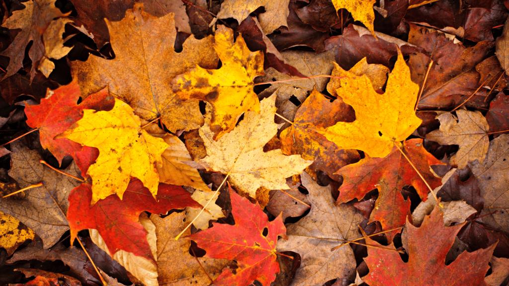 Image of orange leaves