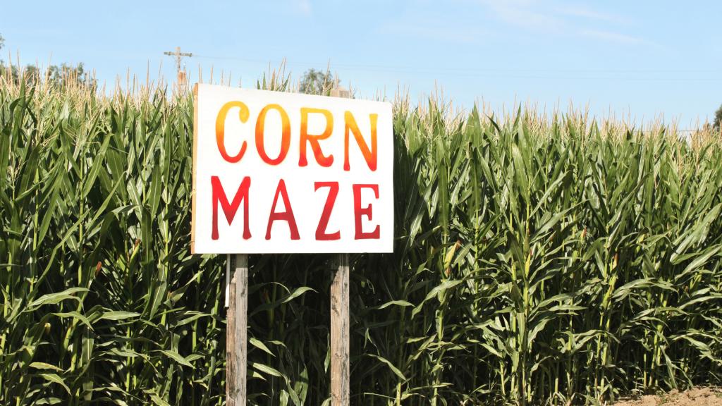 Image of a Corn Maze